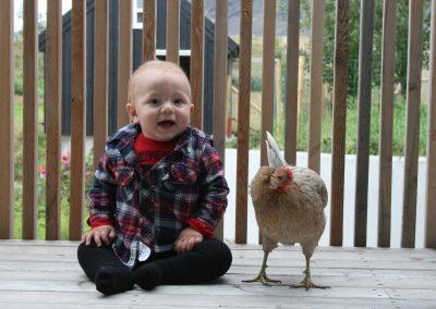 siggi&chicken