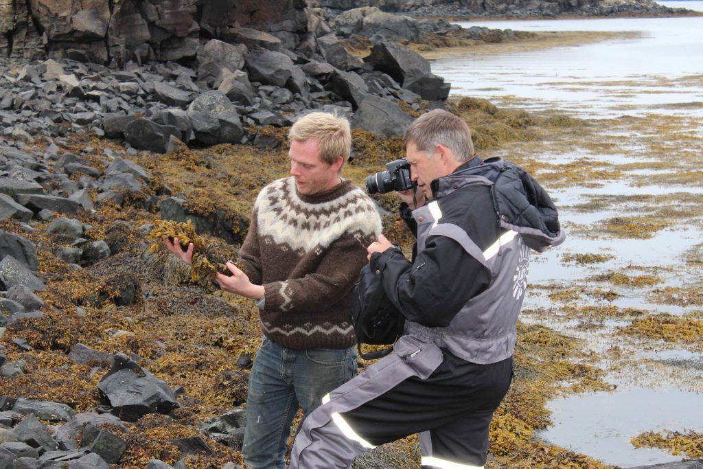 Ingvar og Colin skoða þang í Breiðafirðinum.